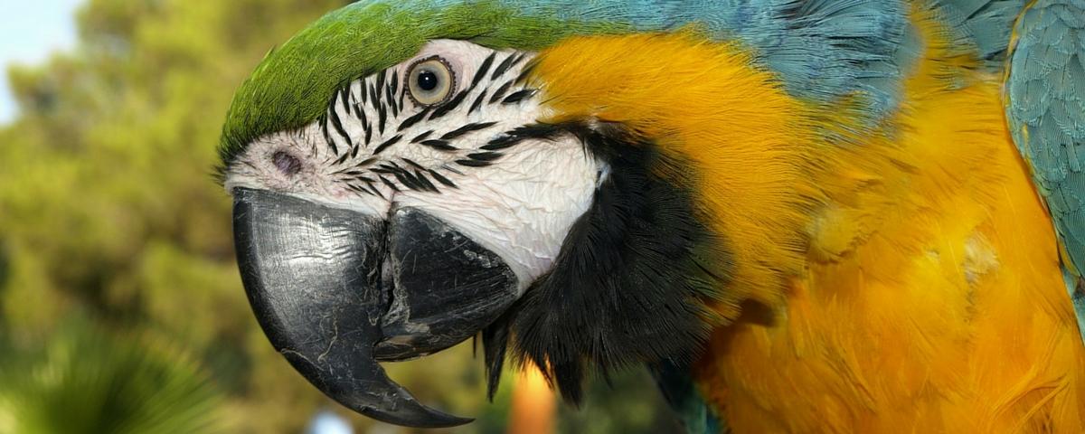 animales exoticos clinica veterinaria huetor vega granada