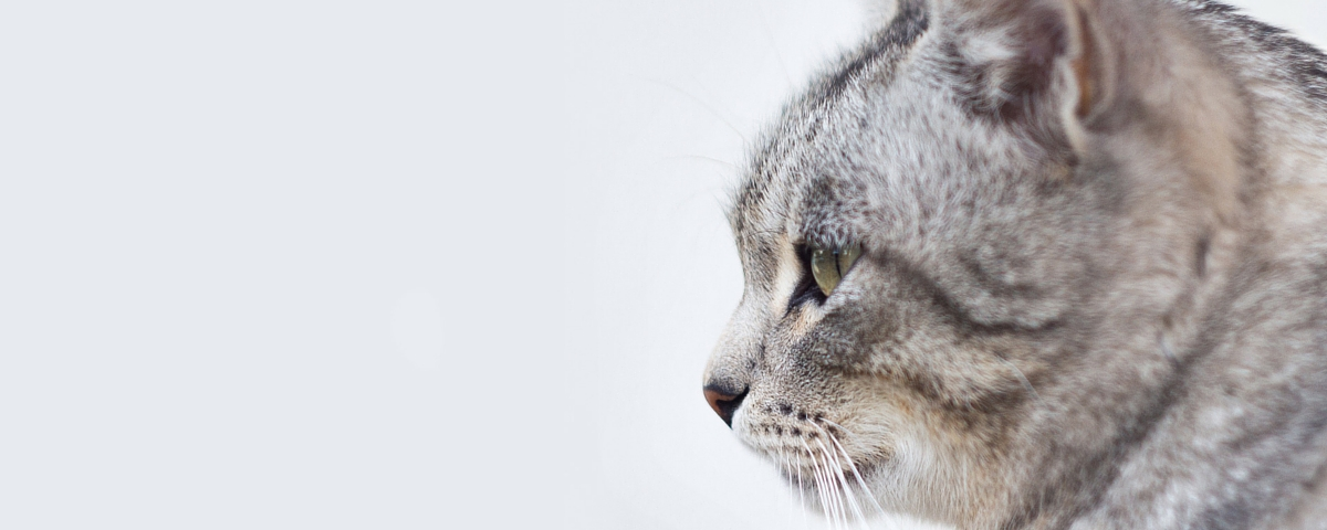 gatos clinica veterinaria huetor vega granada
